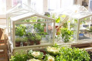 SOCKER-Greenhouse-from-IKEA-mini-greenhouse-1