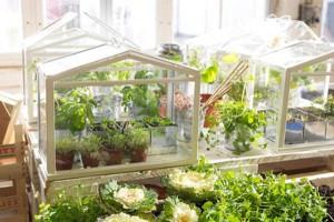 SOCKER-Greenhouse-from-IKEA-mini-greenhouse-1